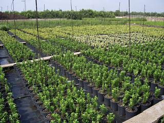 Higiene y seguridad para empresas frut colas y viveros en for Viveros de plantas en lima